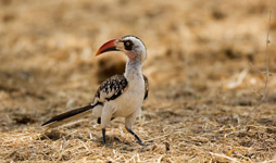 7 Days Tanzania Birding Safari