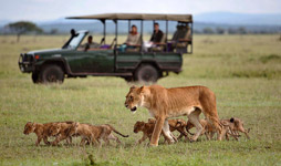 13 Days Tanzania And Kenya Adventure