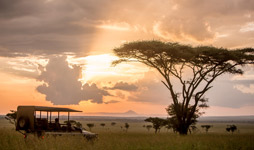 3 Days Tanzania Luxury Safari To Serengeti