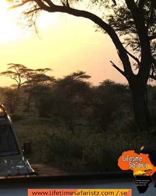 ultimate-guide-for-tanzania-budget-safari-home-maru