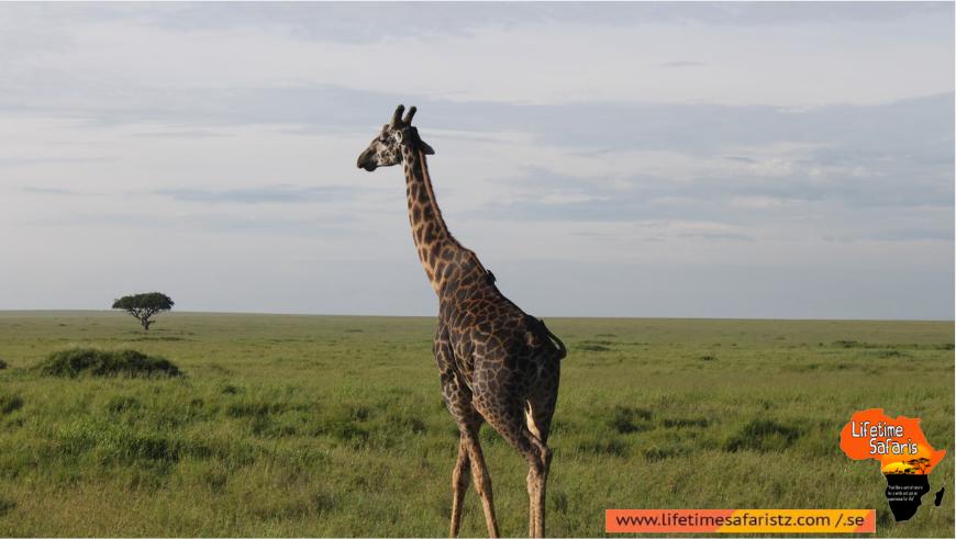 Tanzania Day Trips