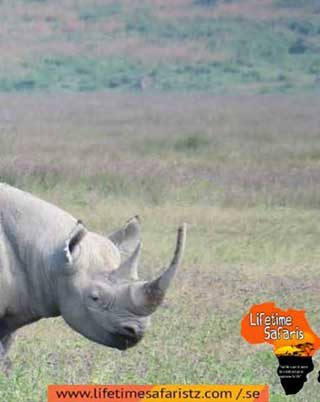 meet-africas-famous-big-five-animals-in-their-natural-habitat-whilst-on-tanzania-safari-tours-home
