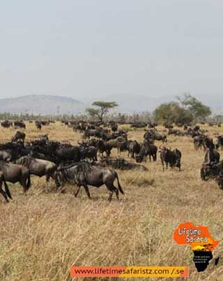 winter-in-tanzania-see-what-makes-it-worth-a-trip-for-tanzania-tours-and-safaris-home