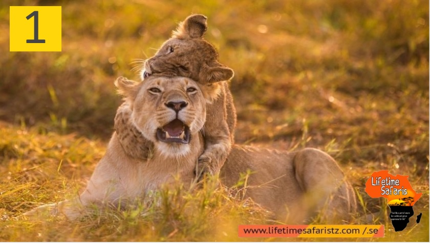 How To Choose Your Perfect Tanzania Safari Package