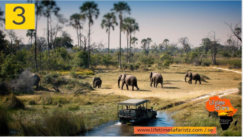 Things To Know Before Plan Tanzania Safari Tours