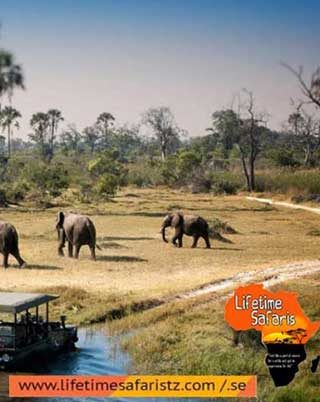 5-thing-to-know-before-planningyour-tanzania-safari-tours-in-2019-home