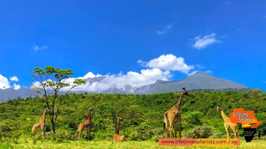 High Abundance Of Unique Wildlife Species – Mikumi National Park