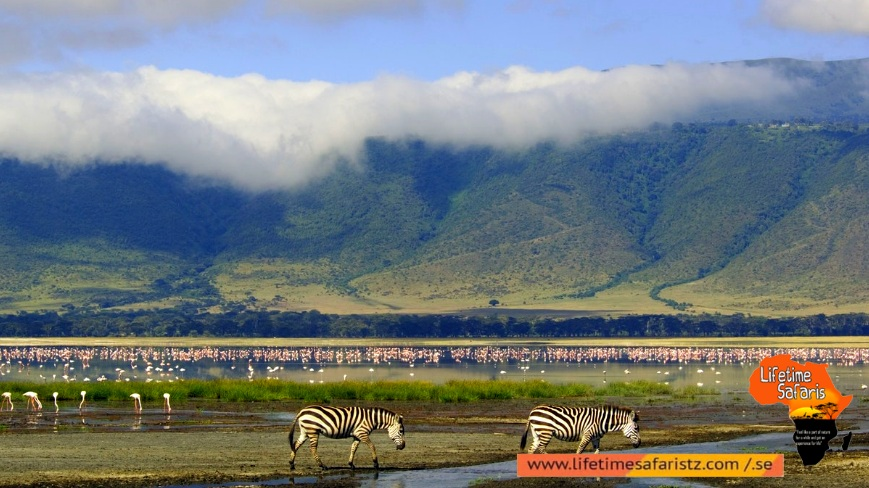 Largest Unbroken Calderas With Full Of Wildlife - Ngorongoro Conservation Area