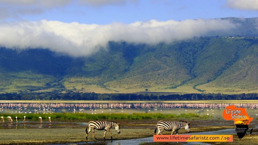 Largest Unbroken Calderas With Full Of Wildlife - Ngorongoro Conservation Area