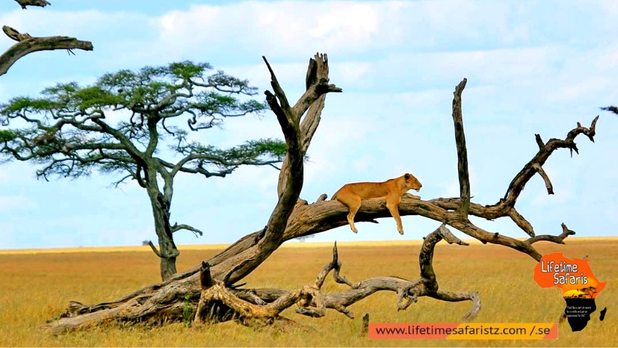 Myriad Of Flora And Fauna At Lake Manyara National Park