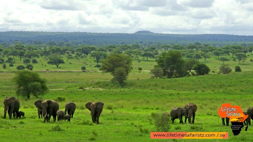 Track The Famous Elephant Migration - Tarangire National Park