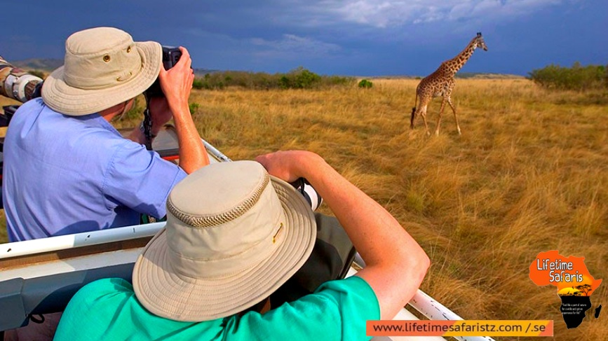 Capture The Great Wildlife Of Tanzania