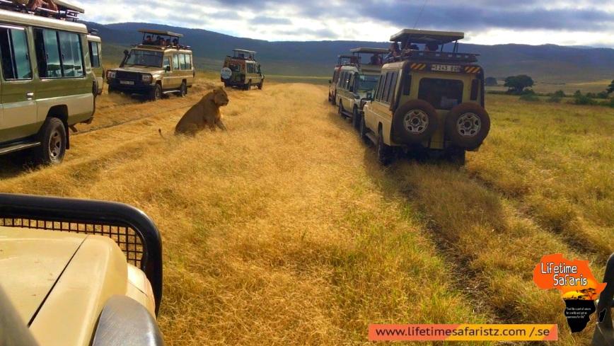 Go To The Wild Centre Of Tanzania