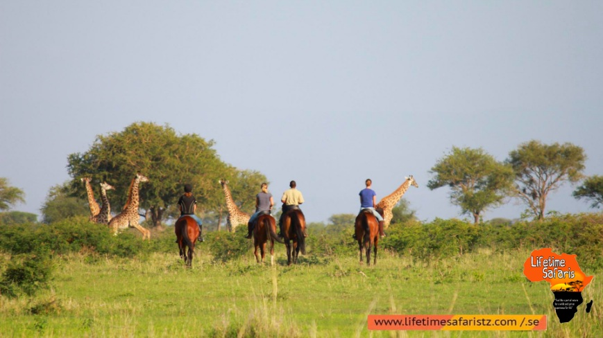 Moments That Can Only Be Fulfilled By Tanzania Horse Riding Safari