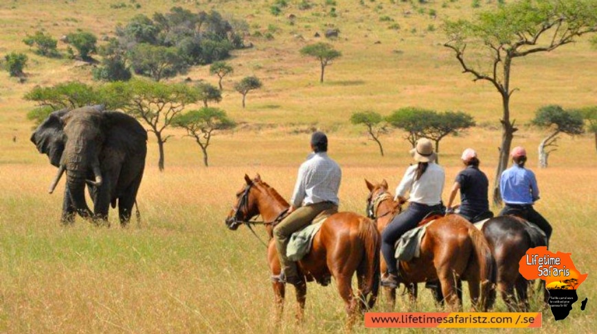 Positivity Of Tanzania Horse Riding