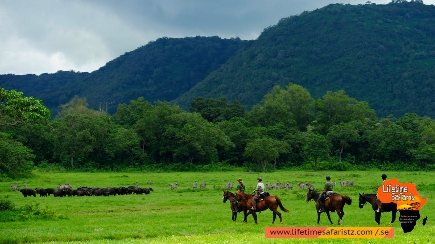 Reason To Select Tanzania Horse Riding Safari