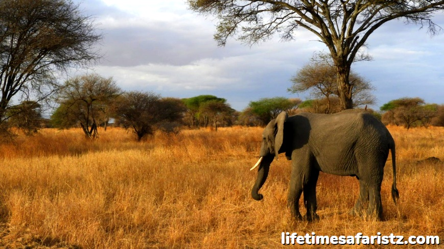Serengeti - The Oldest Ecosystems On The Planet