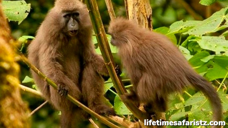 The Kipunji – The New Monkey Species Found Only In Tanzania