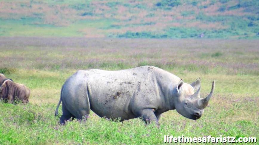 Visit Serengeti, Ngorongoro & Tarangire