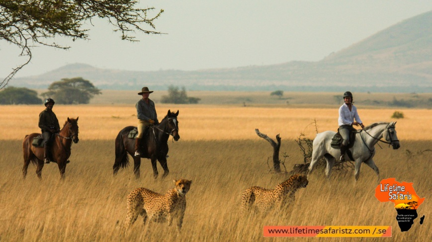 Which Places To Go For Tanzania Horse Riding Safari