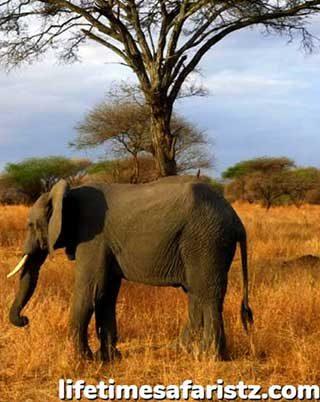 explore-the-8-best-secrets-of-tanzania-that-make-it-a-par-excellence-safari-destination-home