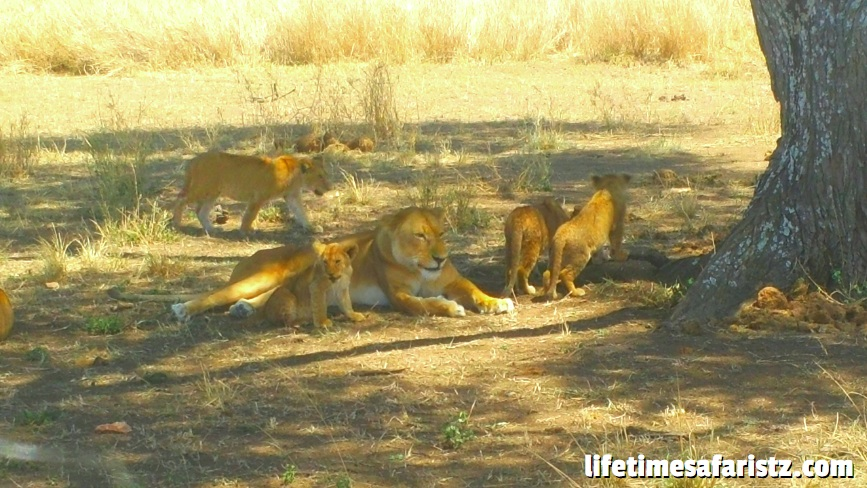 Go For An Unforgettable Safari
