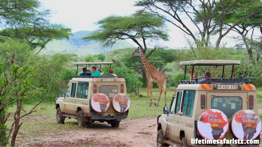 Tanzania Game Drive Safari
