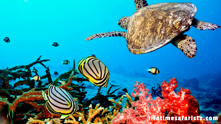 Sustainable Ecotourism - World-Class Coral Reefs