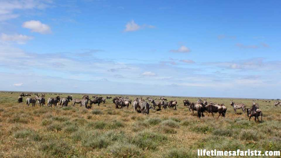 discover-pros-and-cons-of-serengeti-national-park-to-get-the-excellent-value-of-your-trip-featured