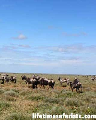 discover-pros-and-cons-of-serengeti-national-park-to-get-the-excellent-value-of-your-trip-home