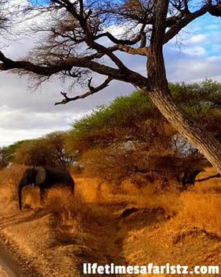 fulfill-your-exploratory-dream-of-bucket-list-goals-through-tanzania-safari-tour-home