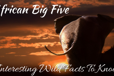 Interesting Wild Facts To Know About African Big Five