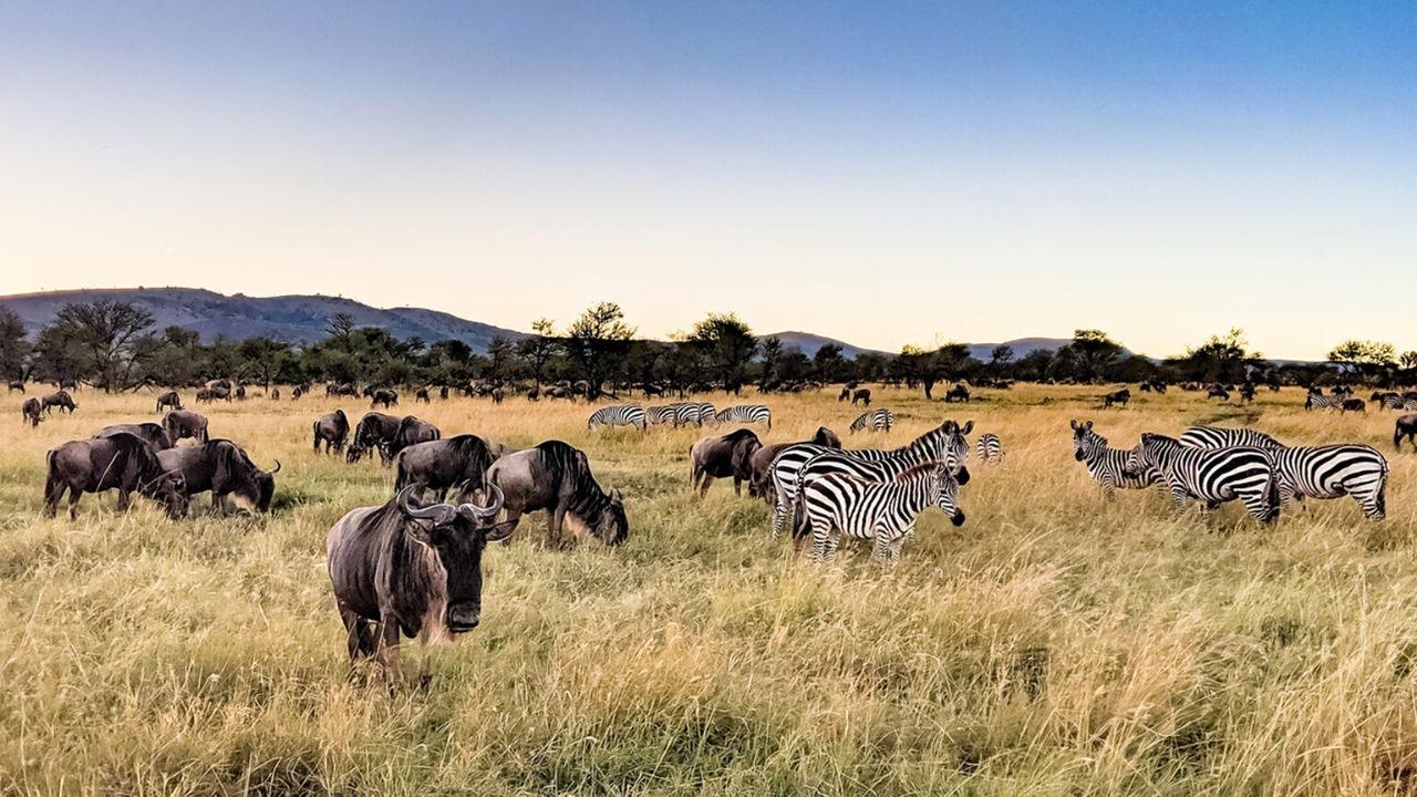 Safari Season Time