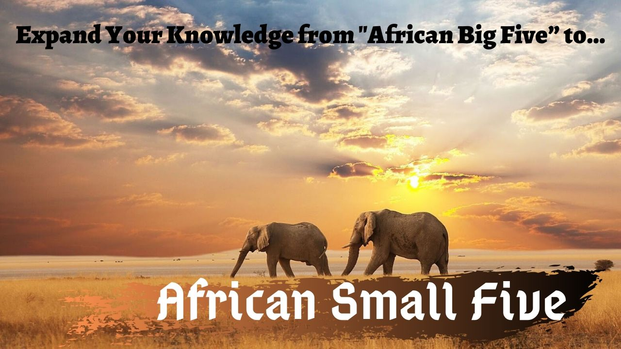 African Small Five Facts