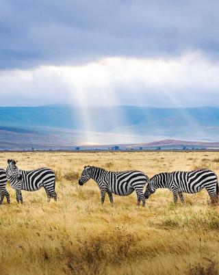 Tanzania Safaris Prices