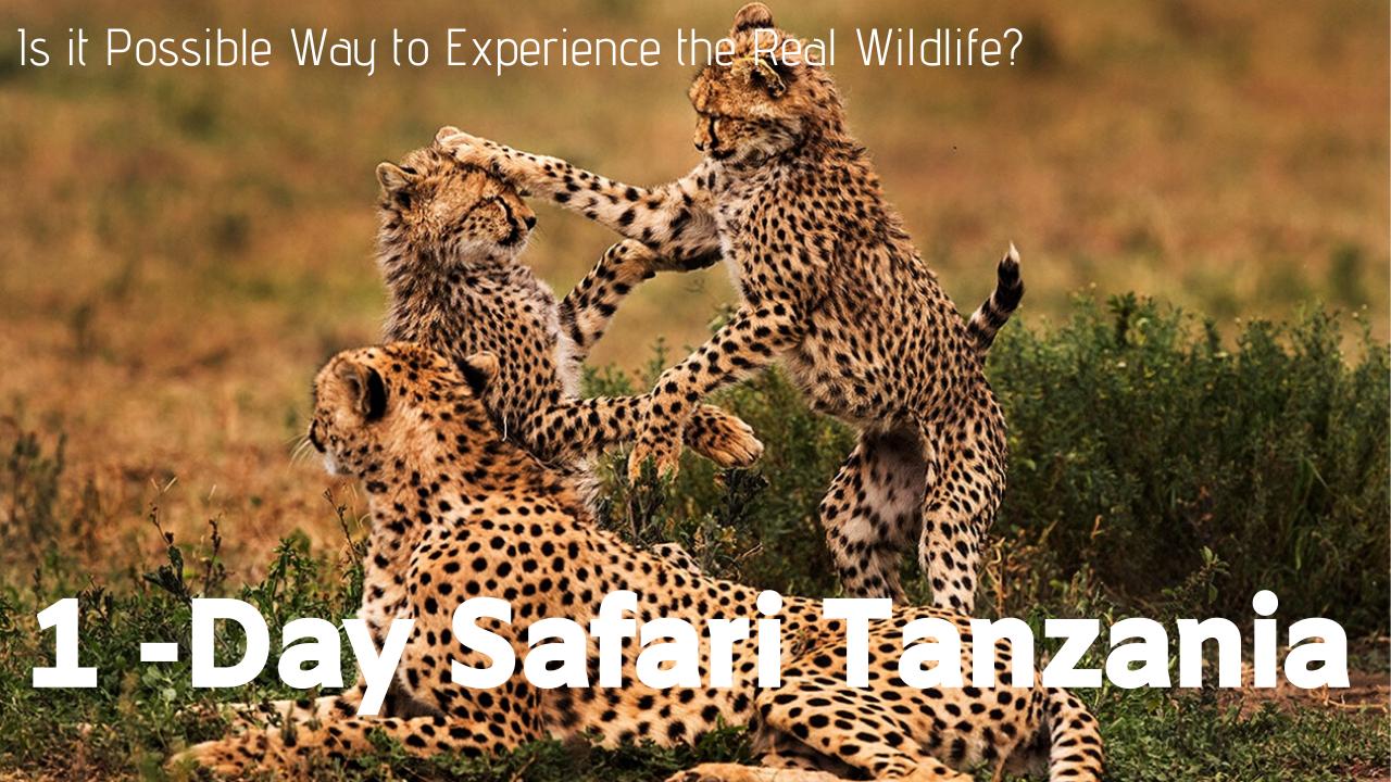 1 Day Safari Tanzania