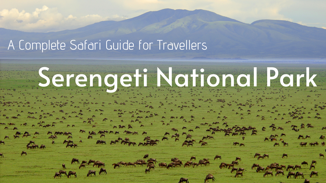 Serengeti park tours & packages