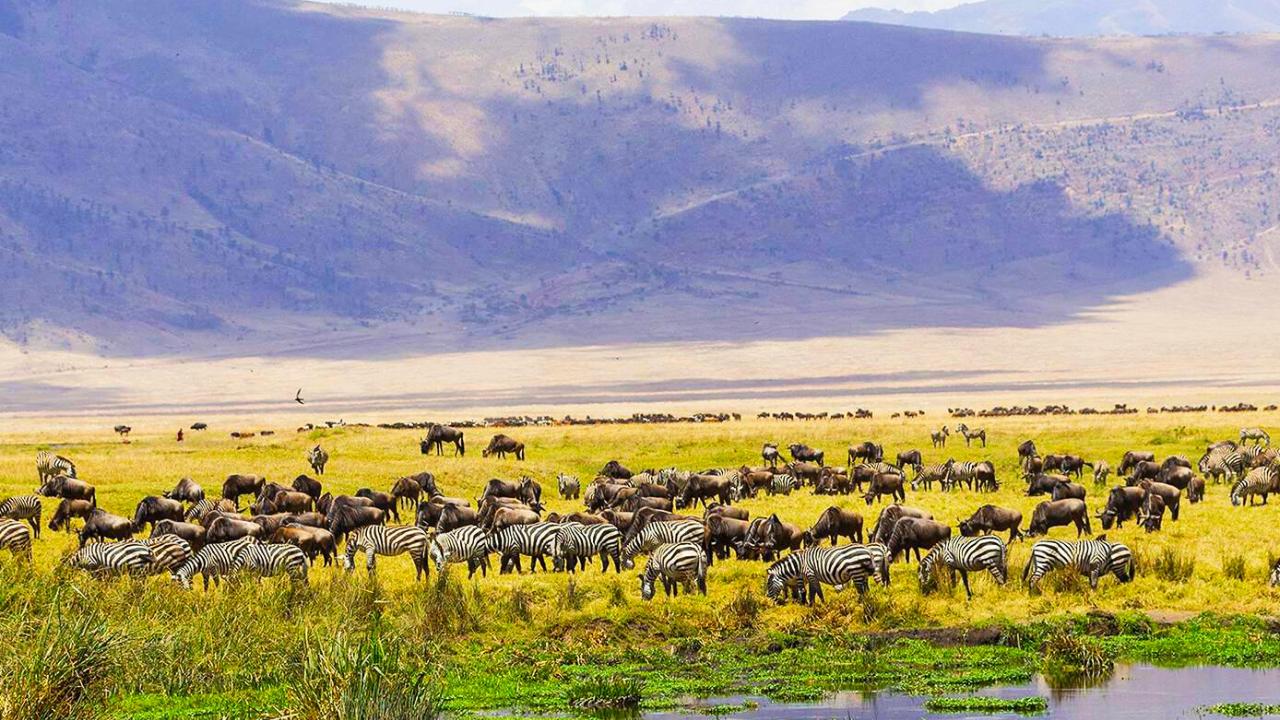 Ngorongoro Day Trip