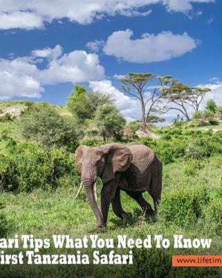 Tanzania Safari Tips