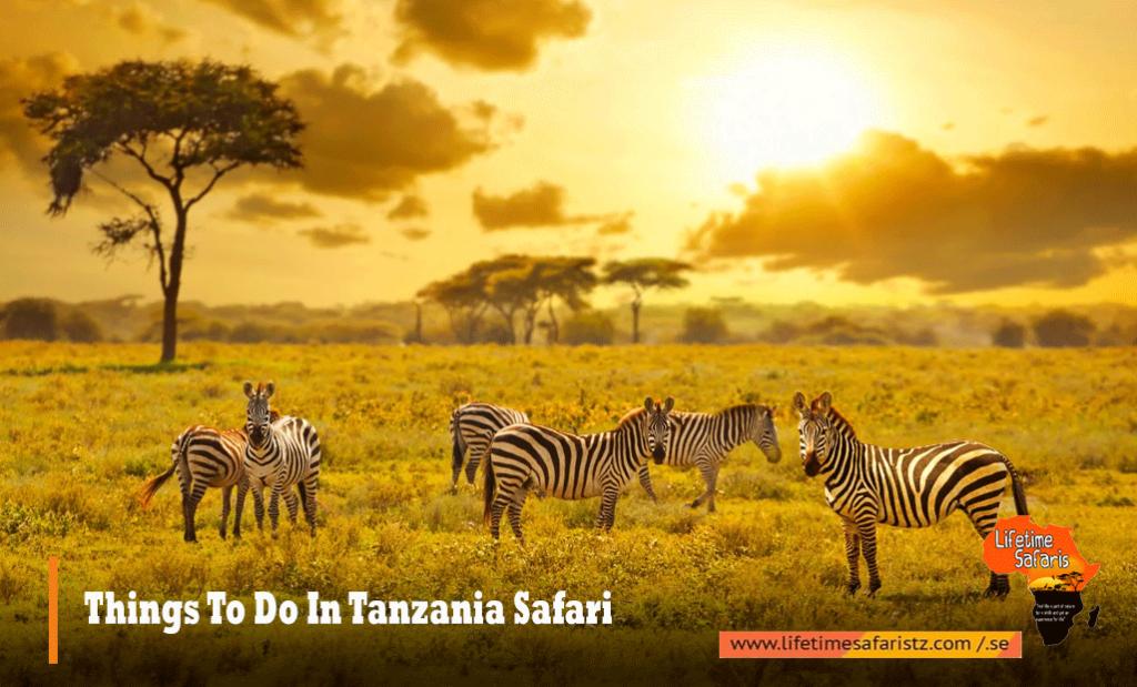 Things To Do In Tanzania Safari