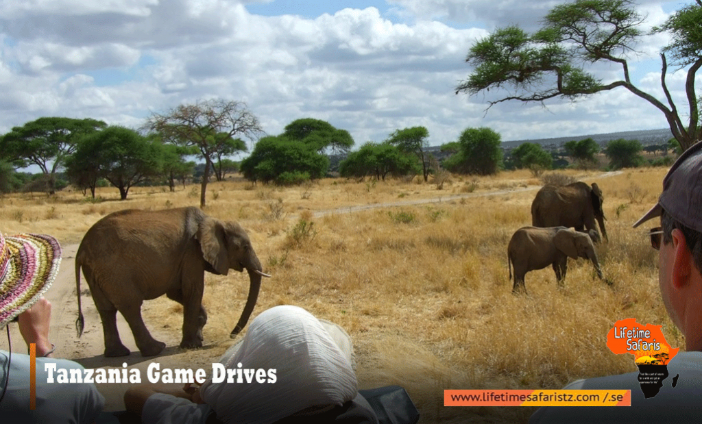 Tanzania Game Drives