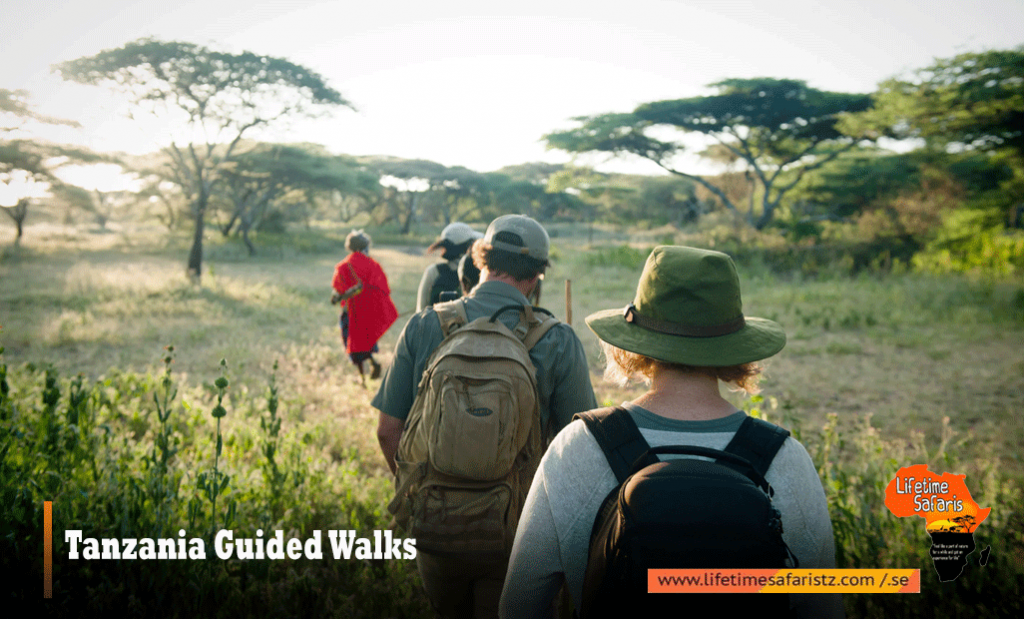 Tanzania Guided Walks