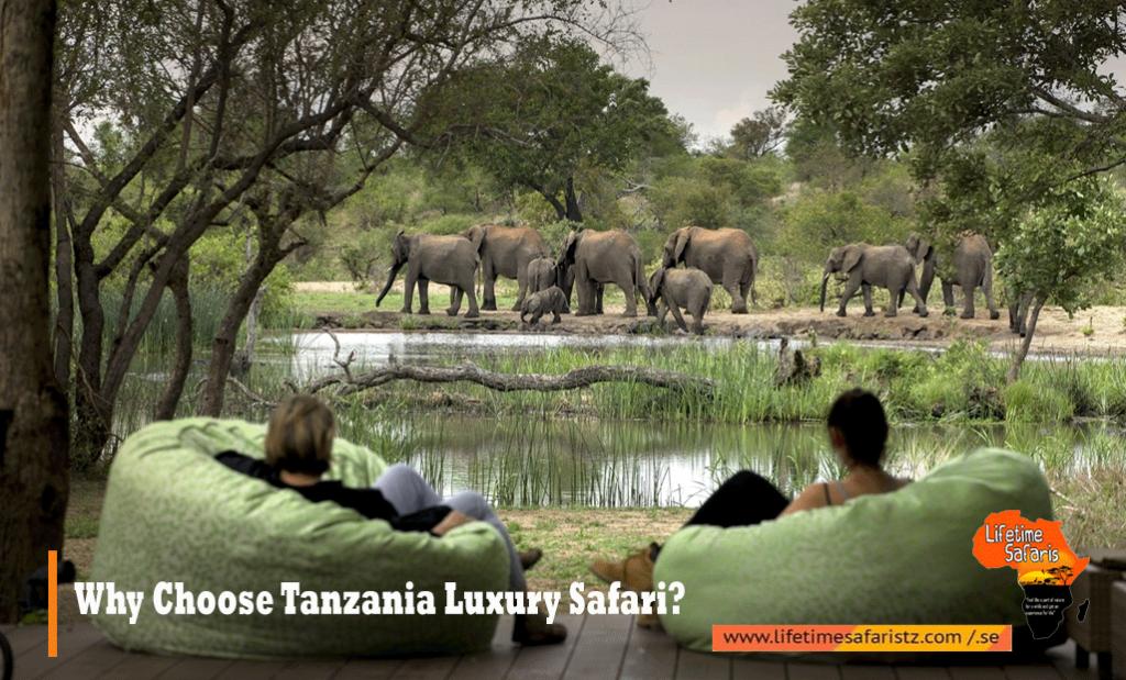 Why Choose Tanzania Luxury Safari