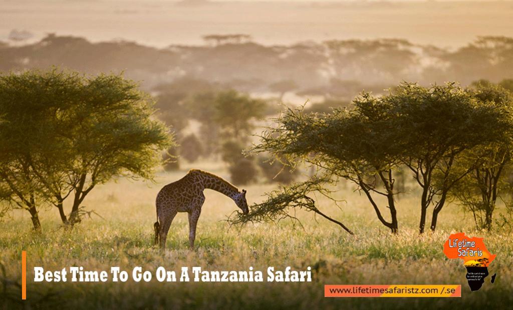 Best Time To Go On Tanzania Safari
