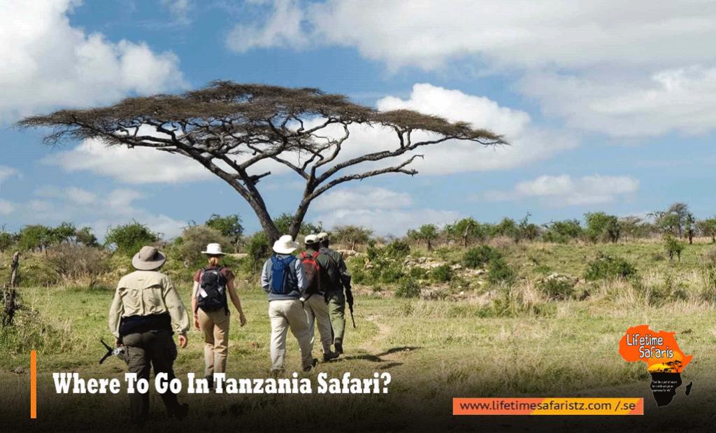 Where To Go In Tanzania Safari