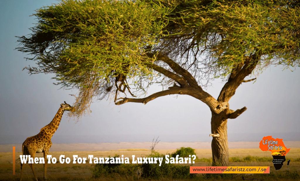 When To Go For Tanzania Luxury Safari