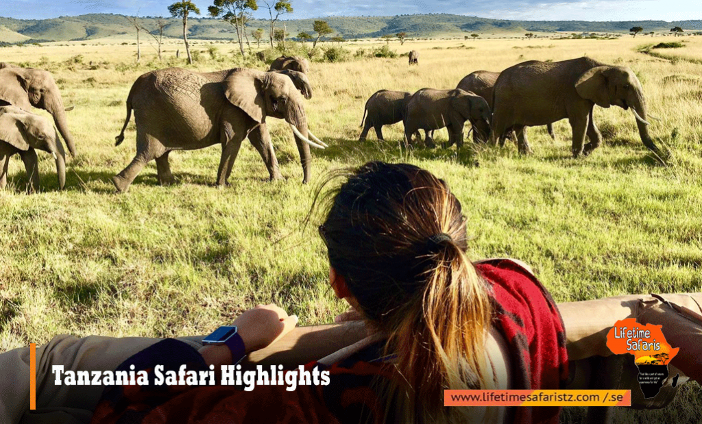 Tanzania Safari Highlights