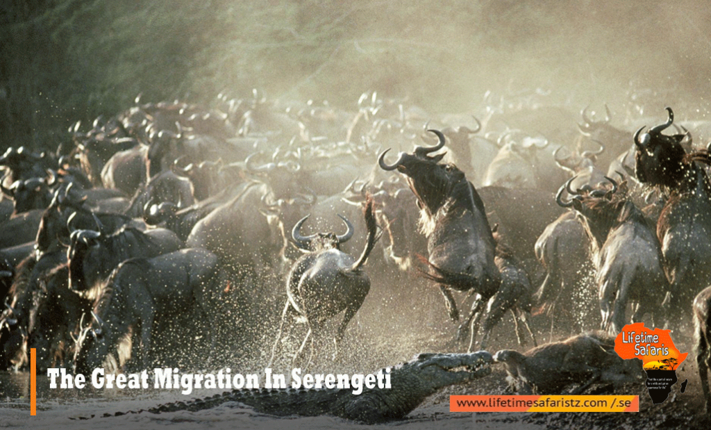 1.The Great Migration in Serengeti