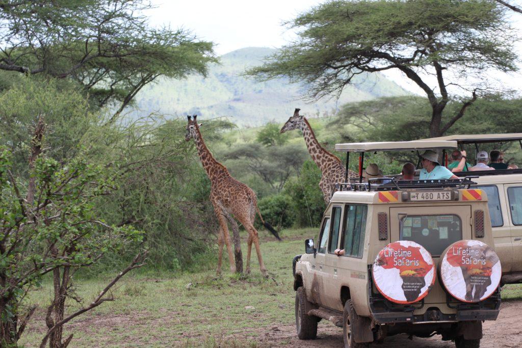 Lifetime Safaris