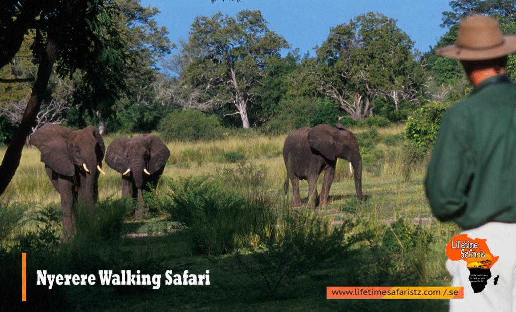 Nyerere Walking Safari